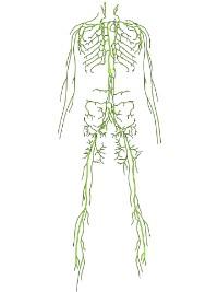 lymphbahnen bein